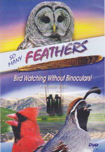 feathers bid dvd